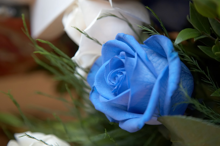 http://raoros.files.wordpress.com/2008/02/blue-rose.jpg
